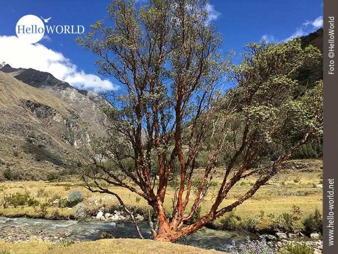 Bilderbuchlandschaft im Nationalpark Huascarán