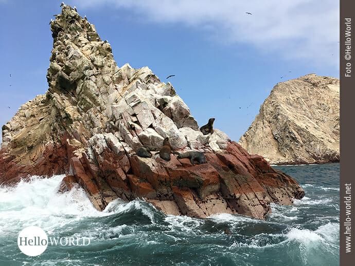 Robben auf den Islas Ballestas im Süden Perus