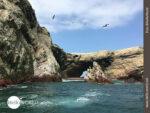 Inselgruppe Islas Ballestas: Paradies für Tiere