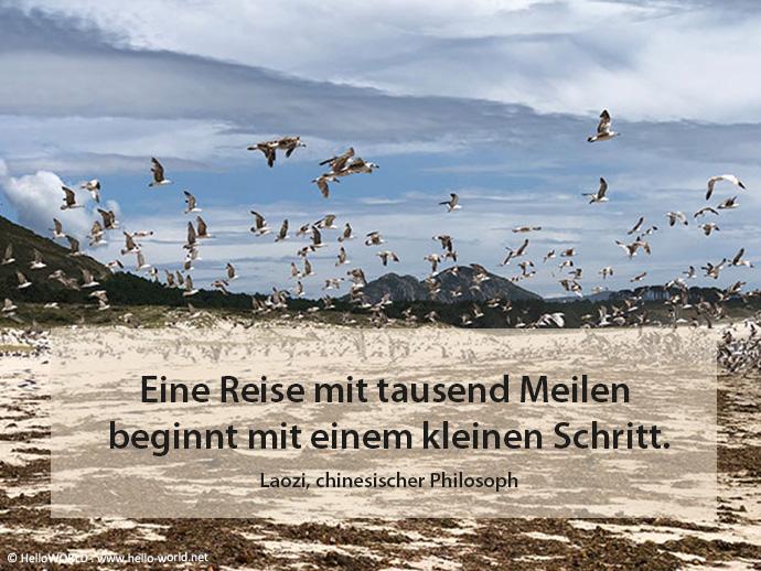 Das Foto zeigt Seevögel am Strand fliegen und eine Weisheit von Laozi.